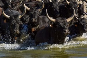 Bulls keeping their heads above water