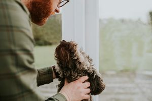 Man looking down at a sweet brown dog, as dog looks up at him