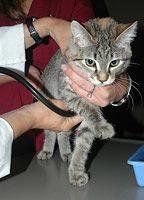 Vet holding a kitten