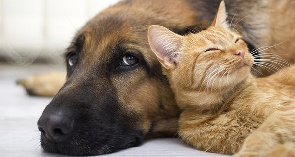 If you buy insurance for your pet, what will it cover – and what will you still have to pay for?