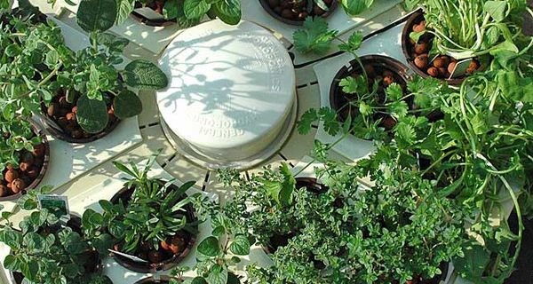 Hydroponic systems can grow a variety of plants in soilless solutions.