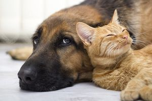 Cat leaning against a dog