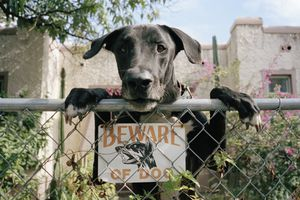 Dog leaning on fence with 'Beware of dog sign