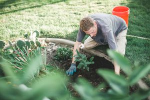Man plants a plant in a garden on a warm fall day