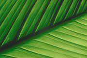 Closeup of leaf