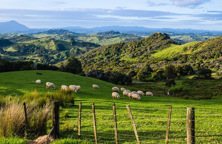 What Does It Cost to Retire in New Zealand?