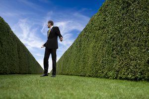Businessman lost in huge garden maze.