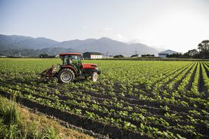 Farmer driving red tractor through a field of soy bean plants.