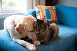 Dog and cat snuggling on a couch