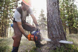 Lumberjack felling tree
