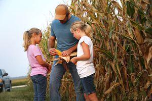 Farmer shows children an ear of corn from their corn field