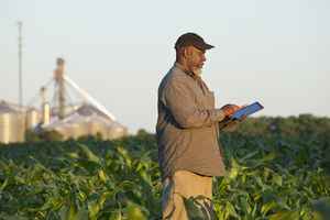 Farmer in corn field checking on crop using tablet
