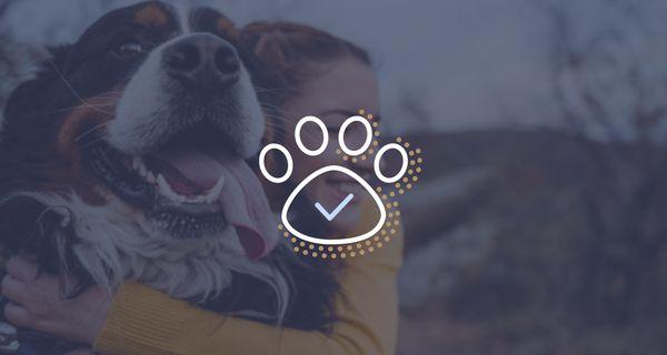 Best Pet Insurance Plans