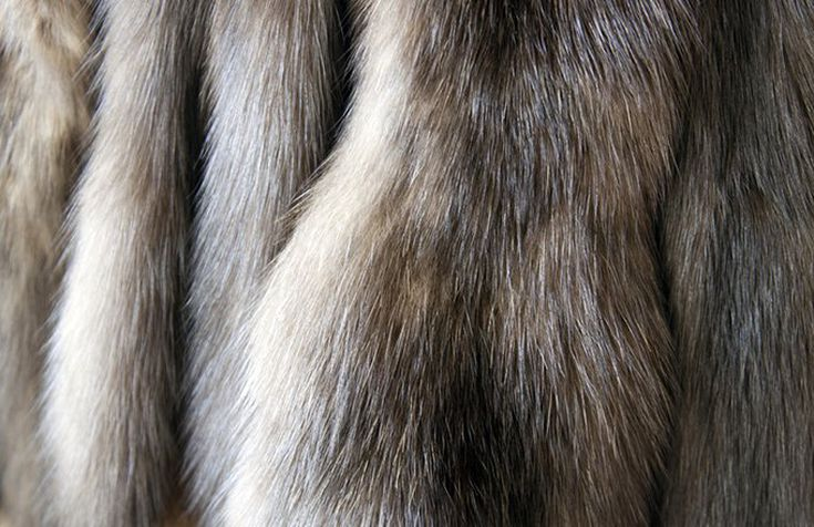 38b9ed51a Buying Fur: Which Variety Is Worth the Most?