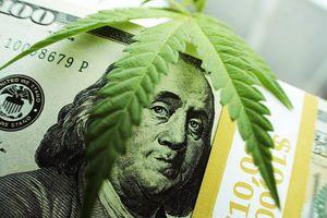 A 100 dollar bill and a marijuana leaf on top.