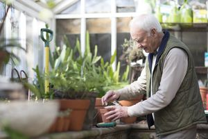 An older person working in a greenhouse.