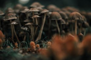 Psychedelic mushrooms. GettyImages/Carol Yepes