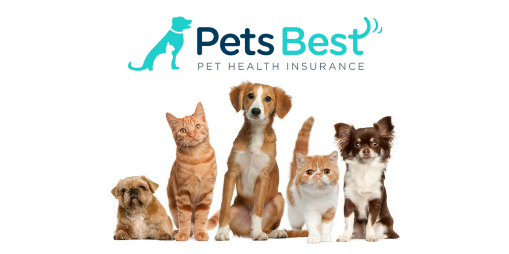 The 9 Best Pet Insurance Plans Of 2020