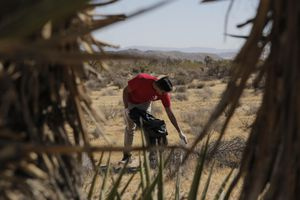 Public Land Trust, Joshua Tree, Mojave Dester