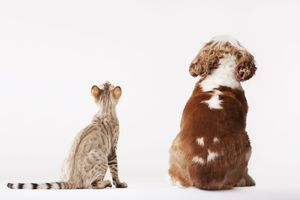 cat and dog looking up wondering about pet insurance
